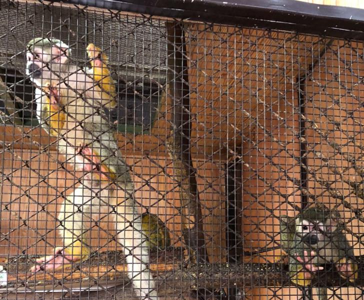 那須ワールドモンキーパークの猿